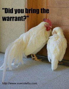 did you bring the warrant