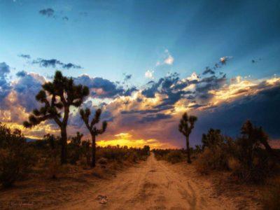 Nevada's killing fields