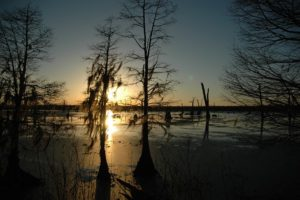 Louisiana killing fields