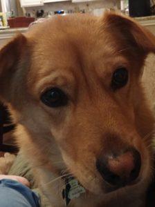 Jordan Dane's Dog Sancho